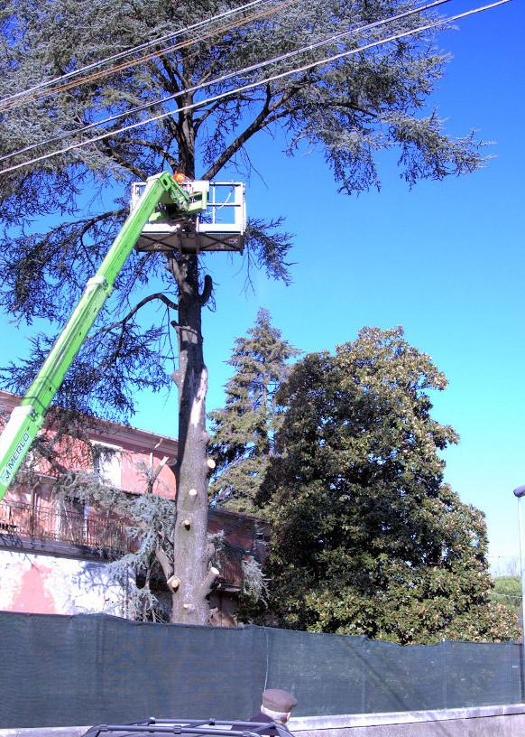 Taglio alberi vecchio ospedale autore silvia lanfranchi